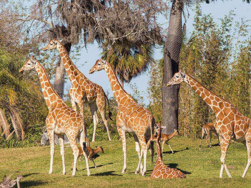 BuschGardensTampaBay_Animal_Attractions